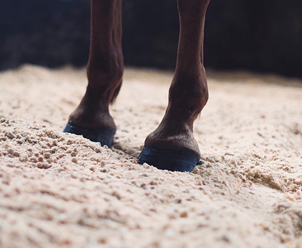 Nellie Berntsson rekommenderar Scandbio stallpellets för häst